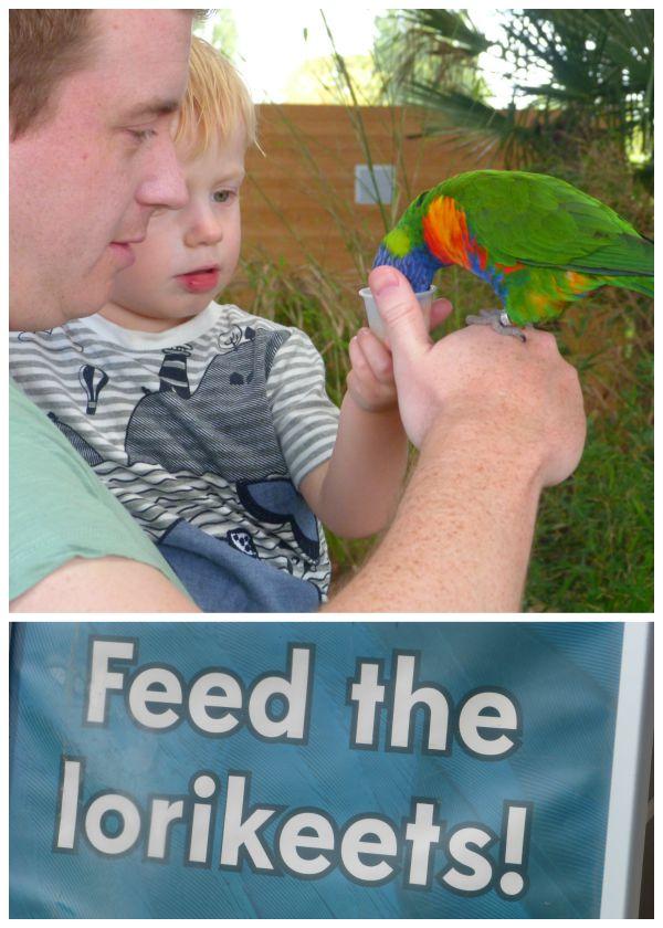 Feeding the Lorikeets