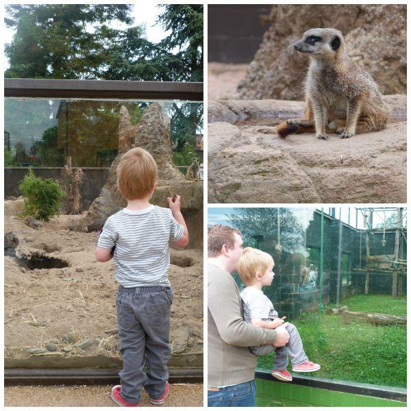 meerkats and monkeys