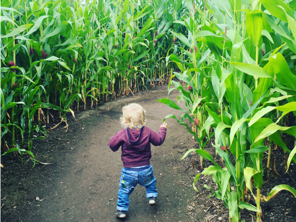 Maize Maze National Forest Adventure Farm