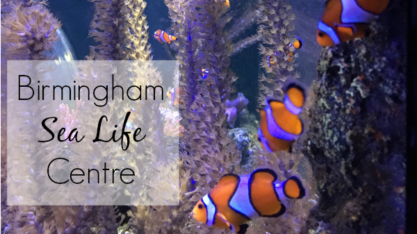 Finding Dory at Birmingham Sea Life Centre