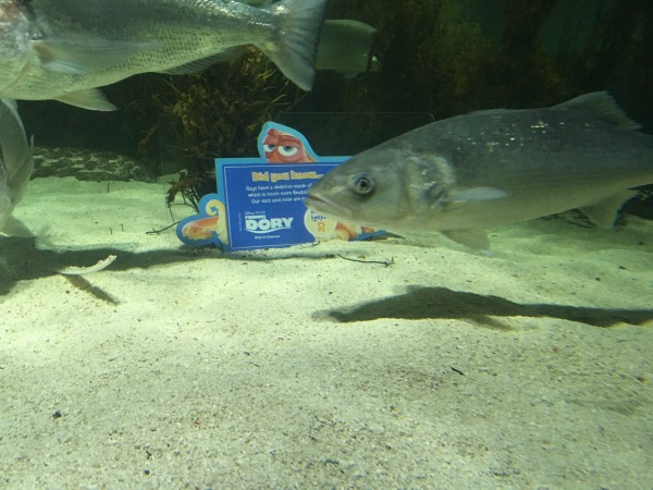 Finding Dory Birmingham Sea Life Centre