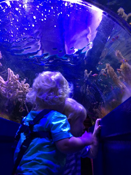 finding Nemo birmingham sea life centre