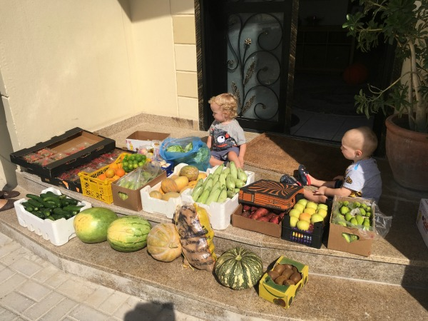 all the fruit and veg