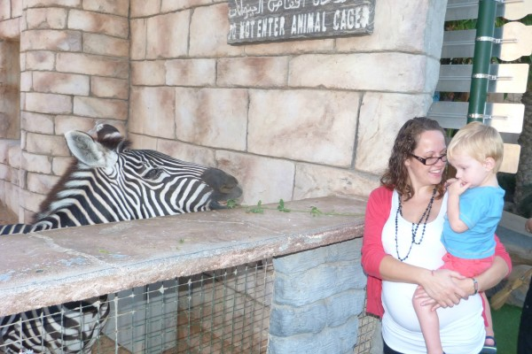 Abu Dhabi Zoo, Me, the Big One, the Bump and the Zebra