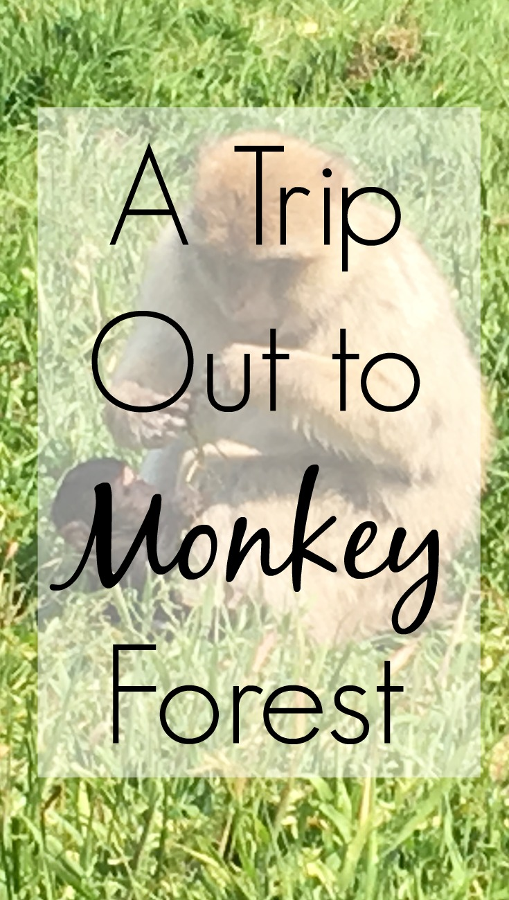 A Day Trip Out to Monkey Forest Trentham UK