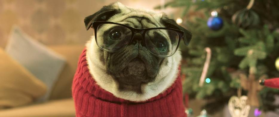 vision direct gizmo the pug Gizmo saves Christmas