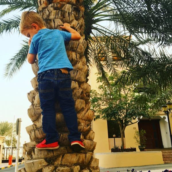 climb palm trees